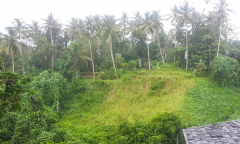 Image 2 from Land for sale freehold ib Ubud