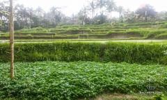 Image 1 from Land for sale freehold ib Ubud