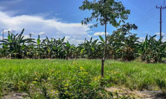 Image 1 from Land for sale freehold in Canggu - Batu Bolong