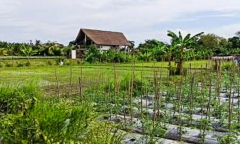 Image 2 from Land for sale freehold in Lovina Area