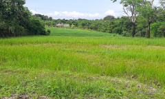 Image 2 from Land For Sale Freehold in Pererenan Canggu
