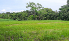 Image 3 from Land For Sale Freehold in Pererenan Canggu