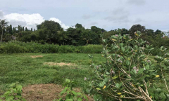 Image 1 from LAND FOR SALE FREEHOLD IN PERERENAN