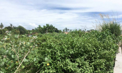 Image 3 from LAND FOR SALE FREEHOLD IN PERERENAN