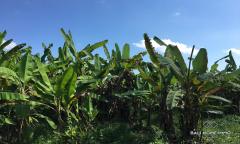 Image 1 from Tanah Dijual di Pererenan