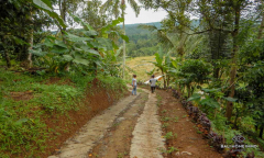 Image 2 from Land For Sale Freehold in Pupuan - North Tabanan