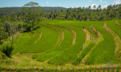 Image 1 from Land For Sale Freehold in Pupuan - North Tabanan