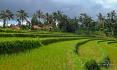 Image 1 from Terrain à vendre en pleine propriété à Pupuan - Tabanan