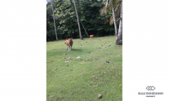 Image 2 from Land for sale freehold in Tabanan - Balian