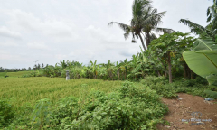 Image 2 from Land for sale freehold in Tanah lot