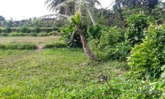 Image 1 from Land for sale freehold in Ubud