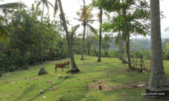 Image 3 from Land for sale freehold near beach in Tabanan - Soka
