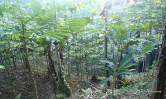 Image 3 from Land for Sale Leasehold in Tampaksiring, Ubud