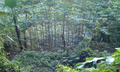 Image 2 from Land for Sale Leasehold in Tampaksiring, Ubud