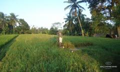 Image 2 from Terrain à vendre Tenure à bail à Tegalalang, Ubud