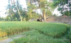 Image 3 from Terrain à vendre Tenure à bail à Tegalalang, Ubud