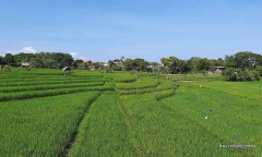 Image 2 from Ricefield view land for sale freehold in Umalas