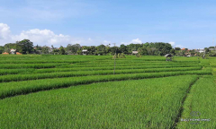 Image 1 from Ricefield view land for sale freehold in Umalas