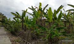 Image 2 from Terrain avec vue sur la rizière à vendre à Kaba-Kaba