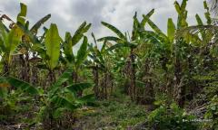 Image 1 from Terrain avec vue sur la rizière à vendre à Kaba-Kaba