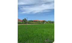 Image 2 from Ricefield View Land For Sale Leasehold in Berawa
