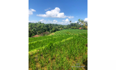 Image 3 from Sebidang Tanah Dengan Pemandangan Sawah Dikontrakkan Jangka Panjang di Tabanan